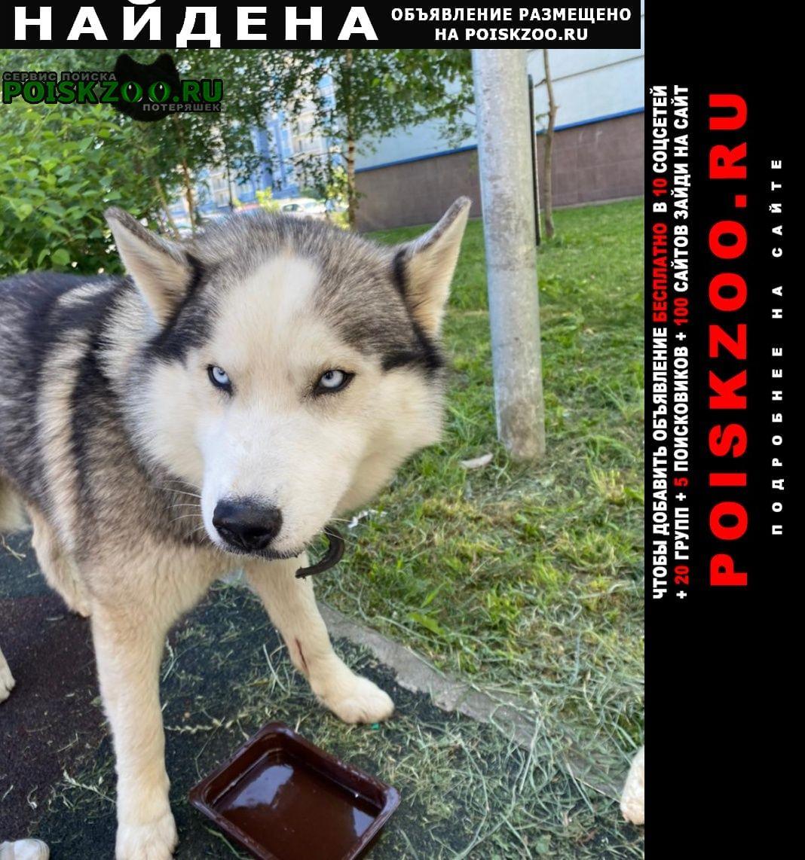 Домодедово Найдена собака