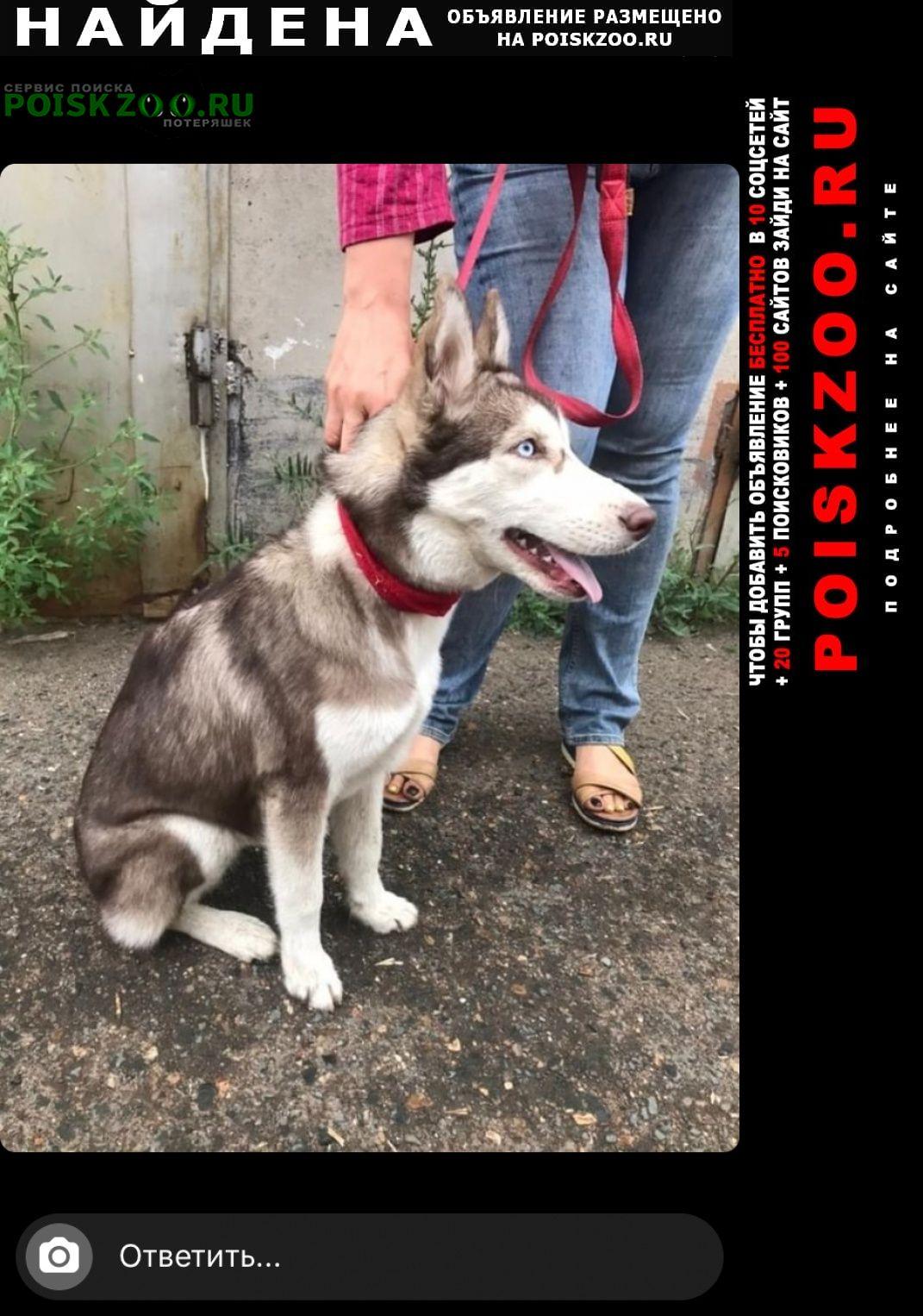 Найдена собака хаски Оренбург