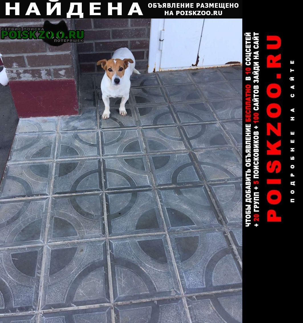 Чебоксары Найдена собака кобель джек рассел 7-8лет