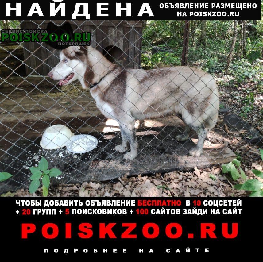 Найдена собака хаски девочка Москва
