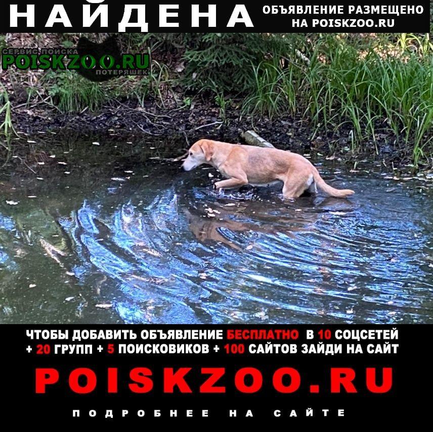 Орехово-Зуево Найдена собака район шевлягино