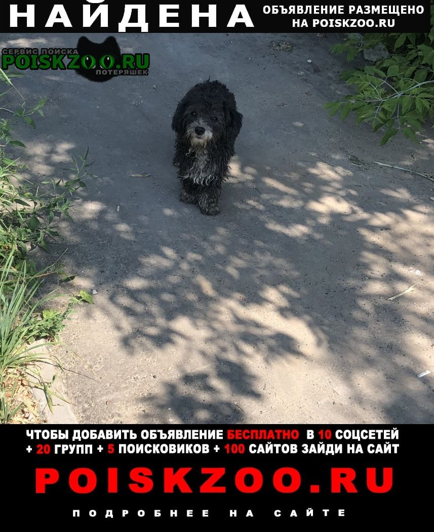 Луховицы Найдена собака