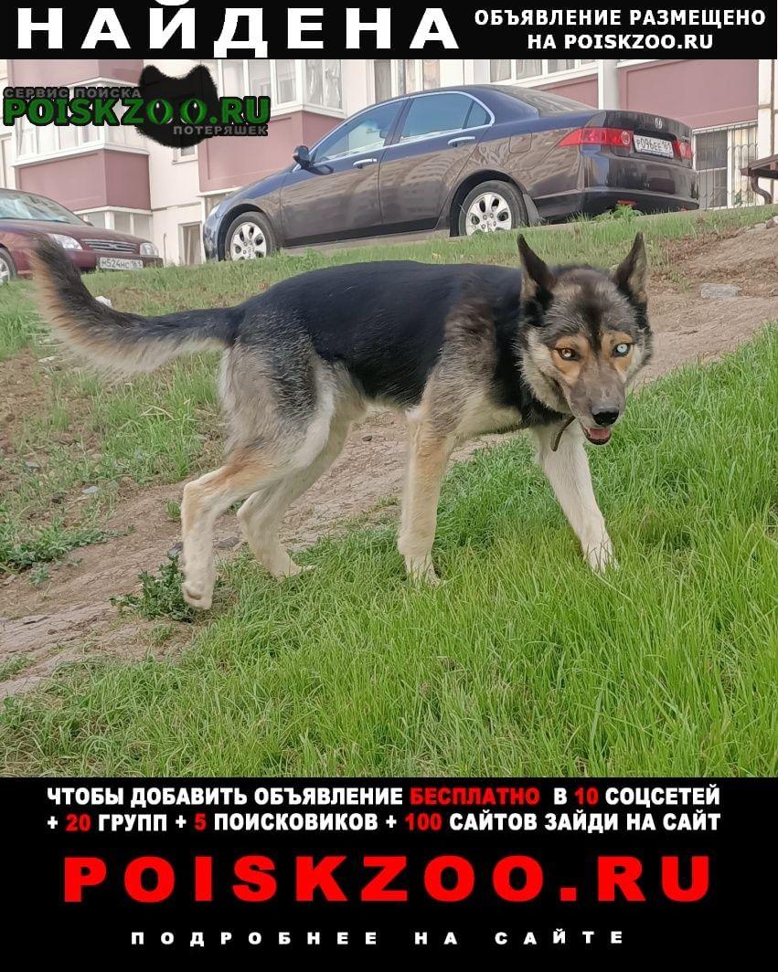Ростов-на-Дону Найдена собака кобель хозяины собачки