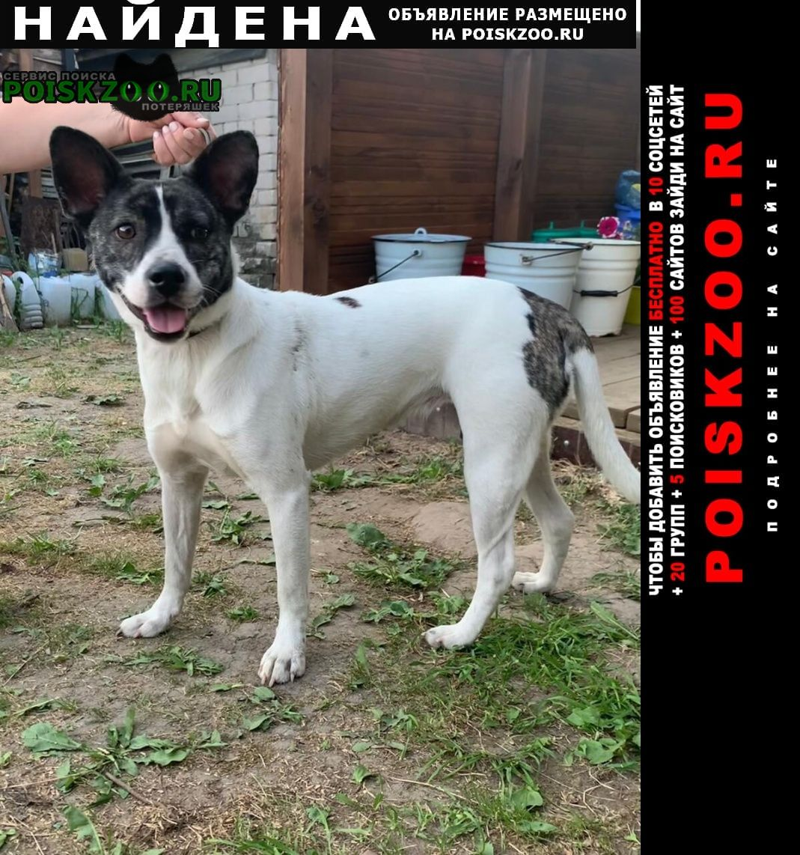 Найдена собака Иваново