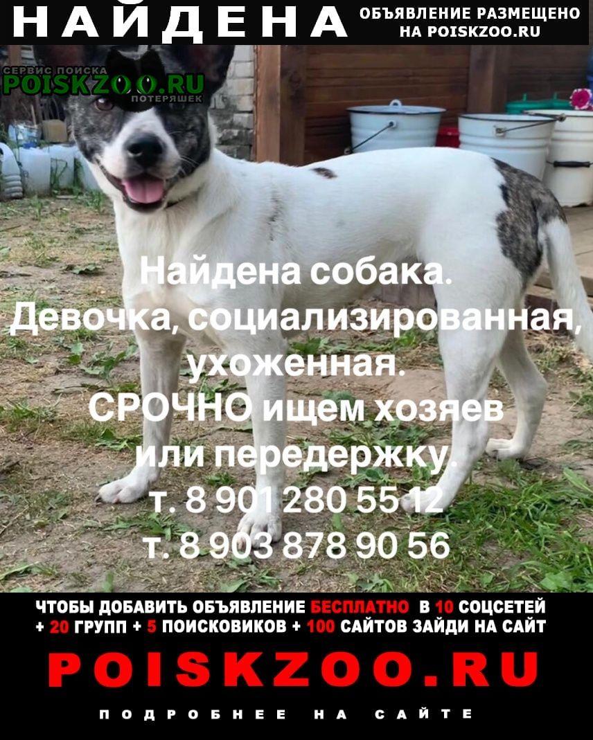 Иваново Найдена собака. ищем ее реальных хозяев