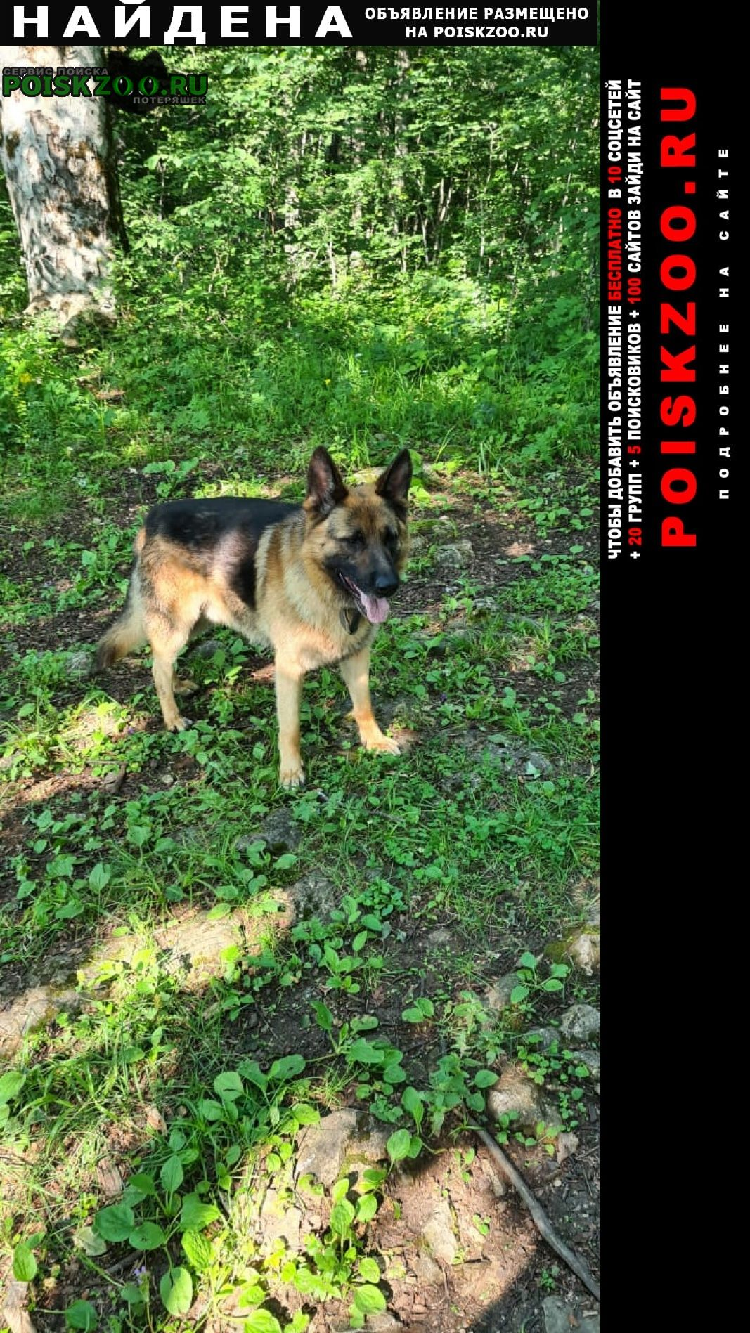 Найдена собака кобель, на шее 2 ошейника Майкоп (Адыгея)