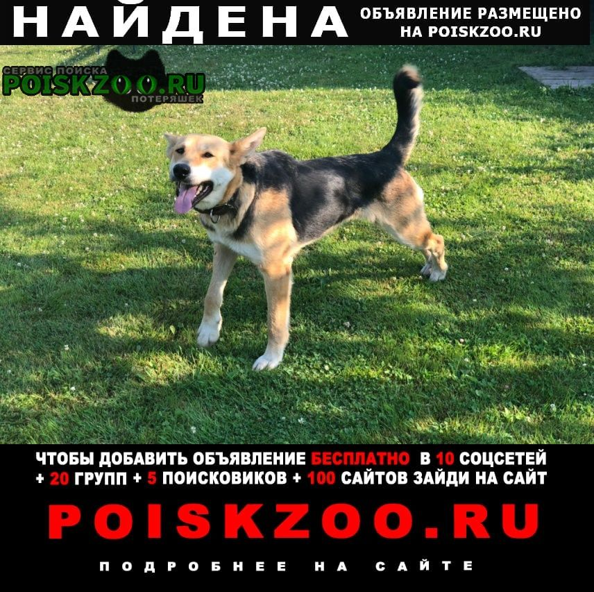 Найдена собака девочка, дворняжка Заокский