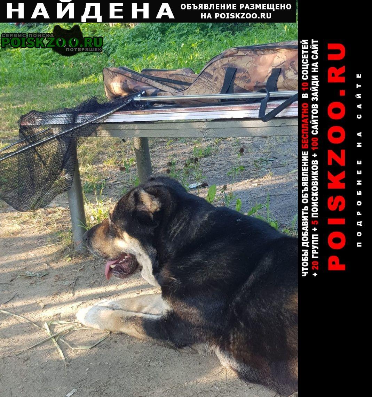 Нарофоминск Найдена собака деревня мачихино снт химик