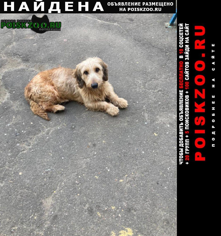 Зеленоград Найдена собака кобель