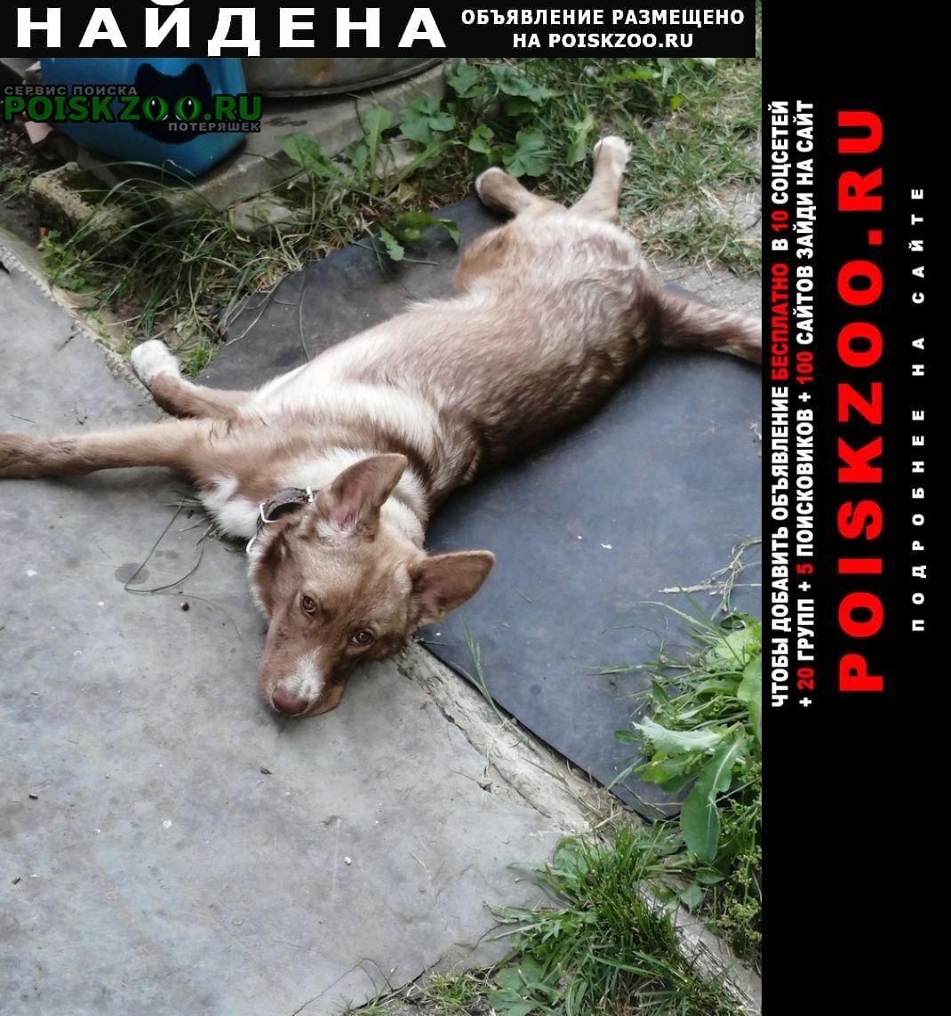 Нижний Новгород Найдена собака кобель