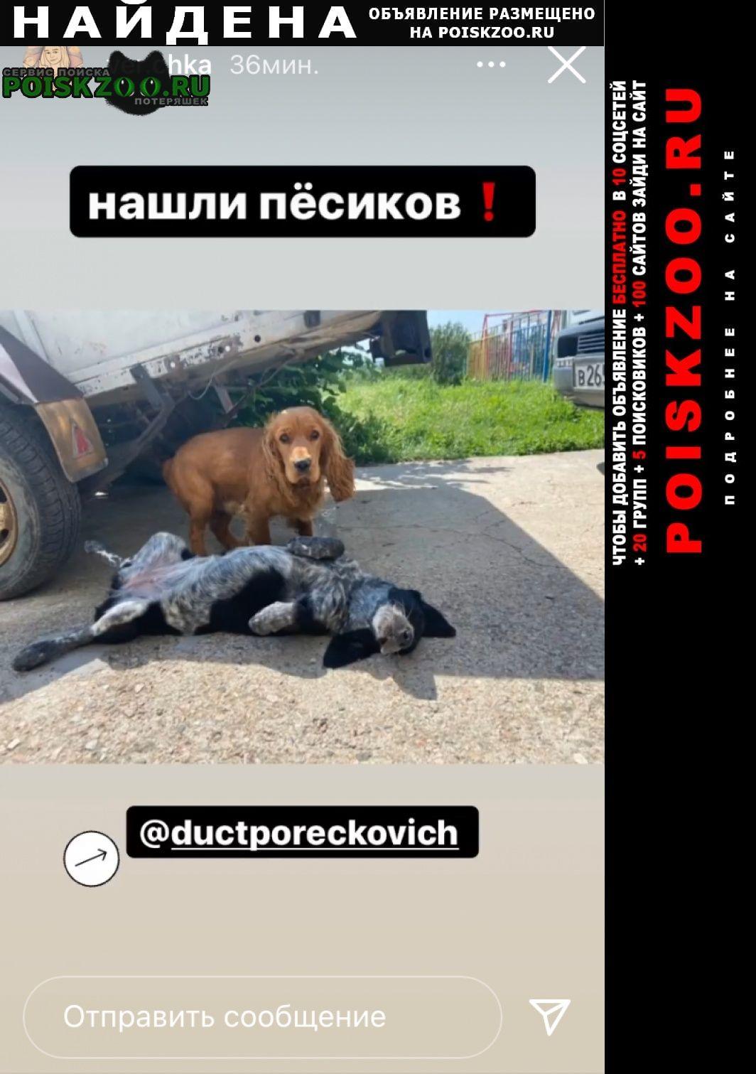 Найдена собака два кокера Симферополь