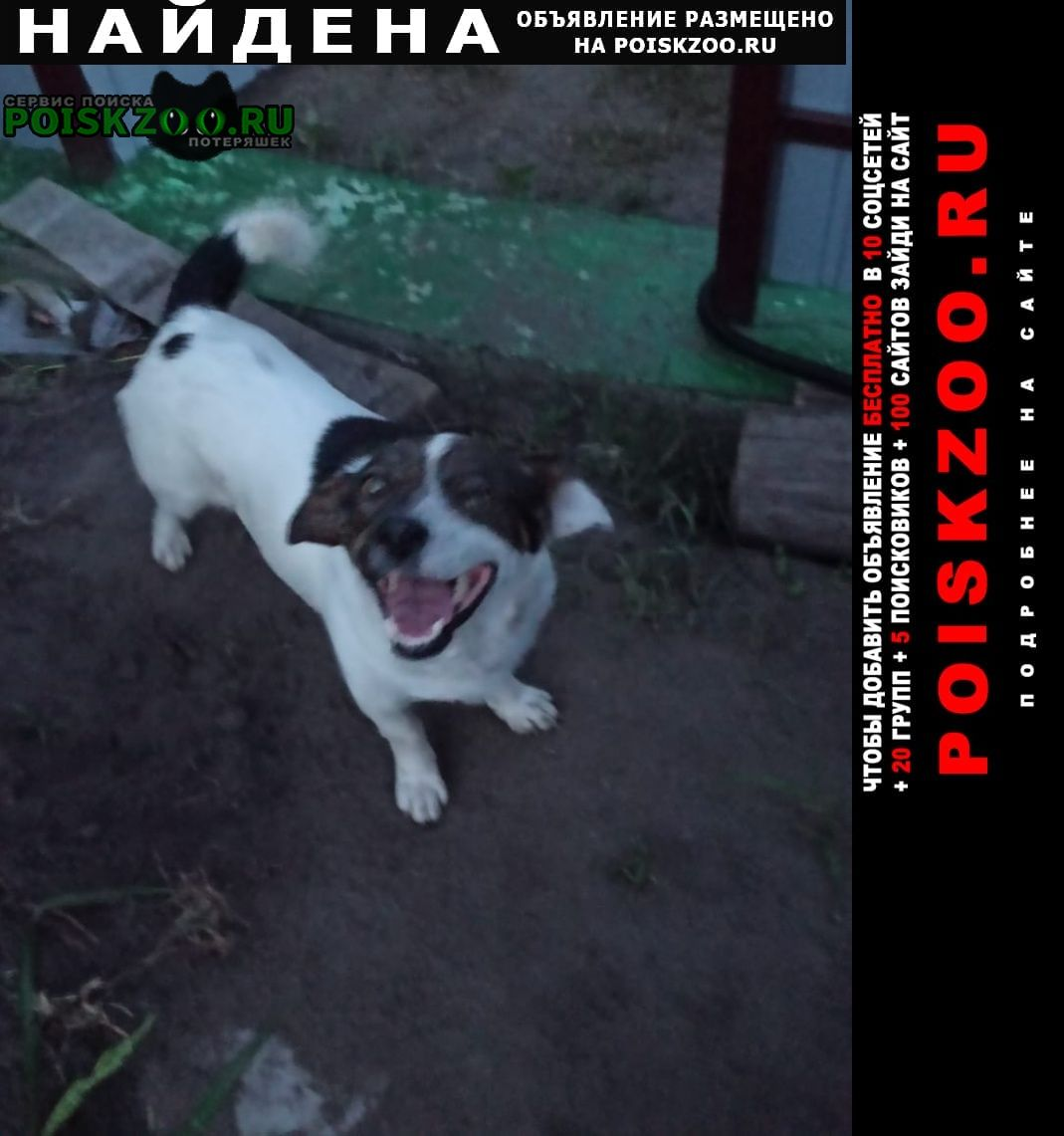 Найдена собака Грязи