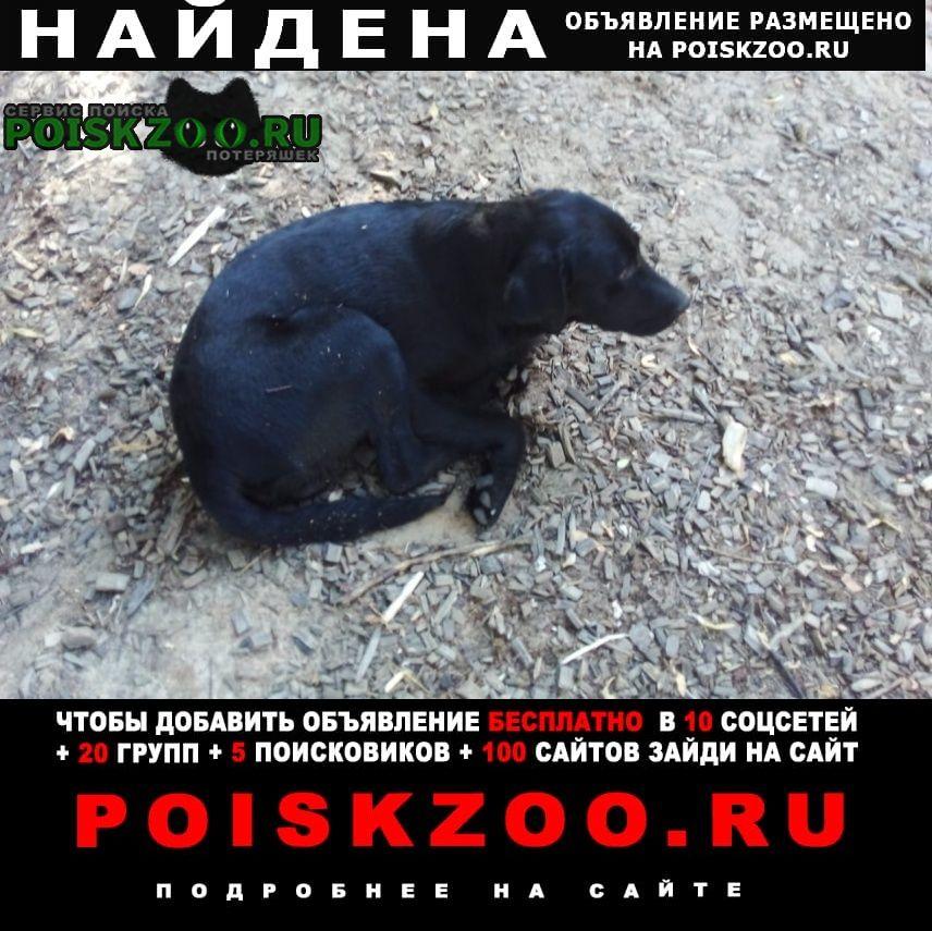 Казань Найдена собака кобель гуляет черная собака
