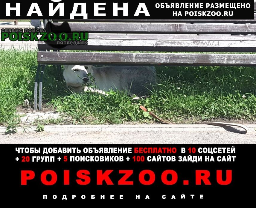 Иркутск Найдена собака