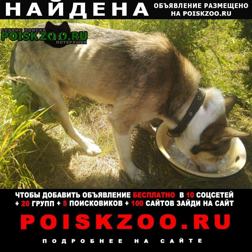 Найдена собака кобель Шуя
