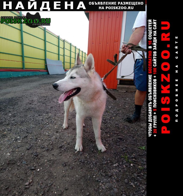 Солнечногорск Найдена собака кобель, хаски
