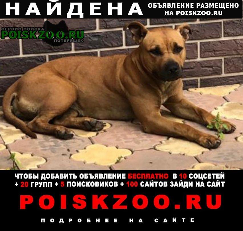 Малаховка Найдена собака