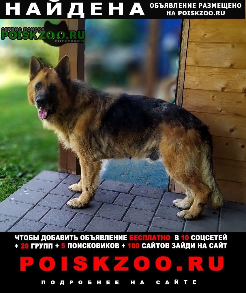 Найдена собака кобель Малаховка