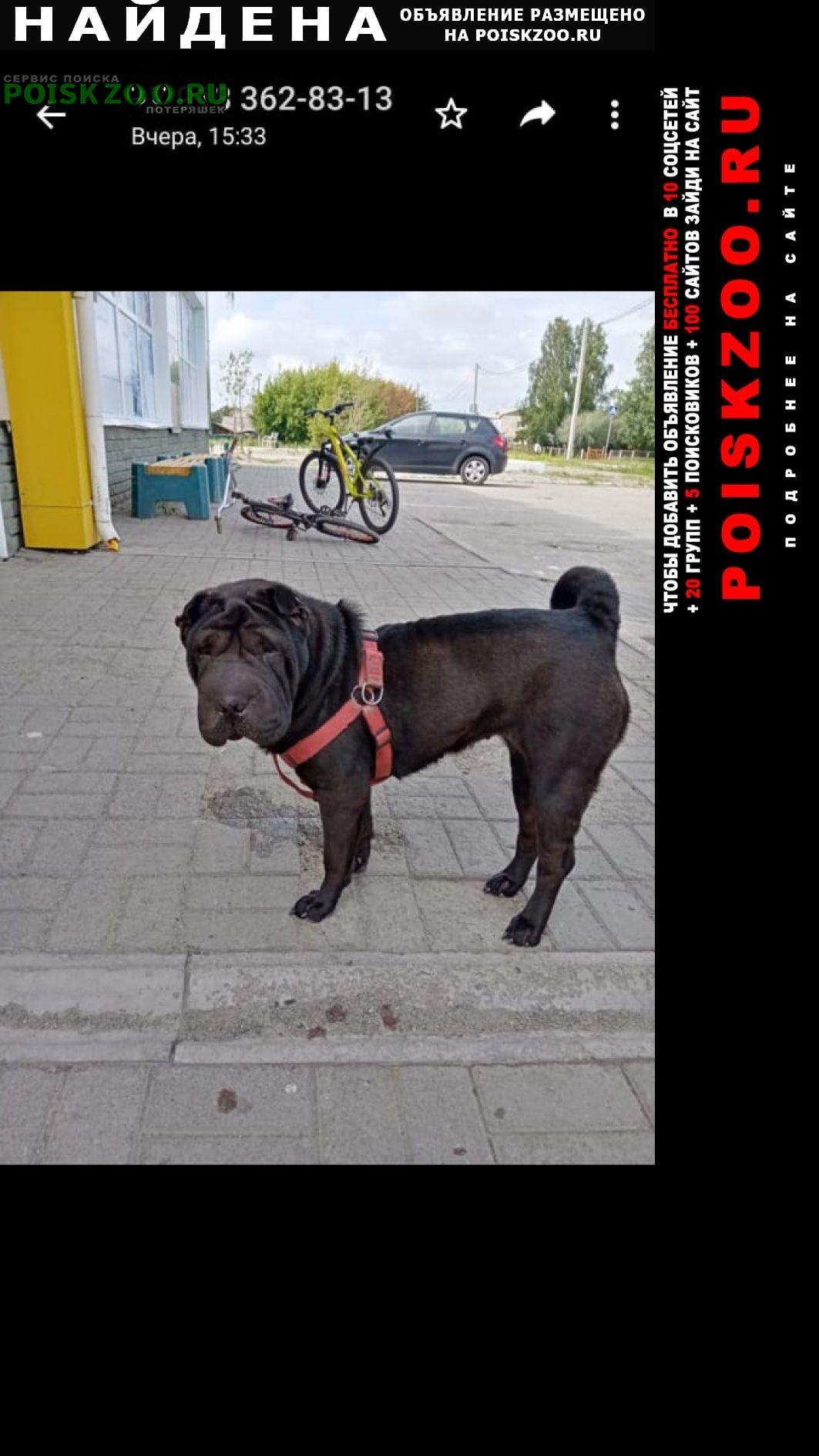 Барнаул Найдена собака в посёлке сибирский