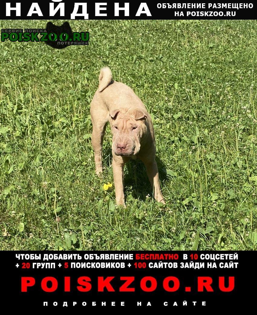 Найдена собака шарпей Москва
