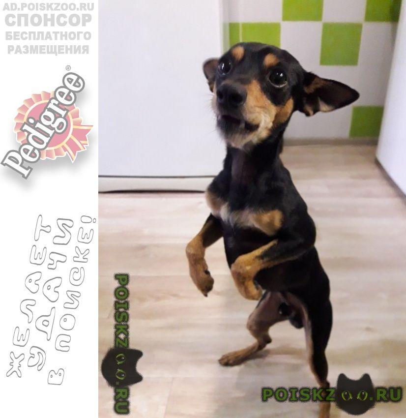 Найдена собака кобель г.Новороссийск