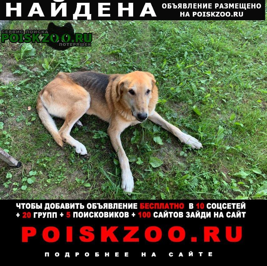 Найдена собака кобель русская гончая в волошовском сп Луга