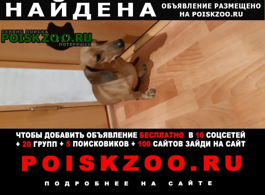 Тюмень Найдена собака подобрана