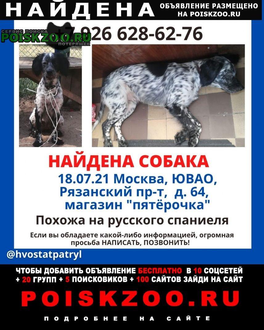 Москва Найдена собака срочно
