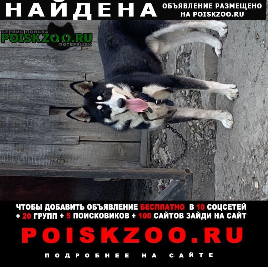 Воронеж Найдена собака кобель порода хаски