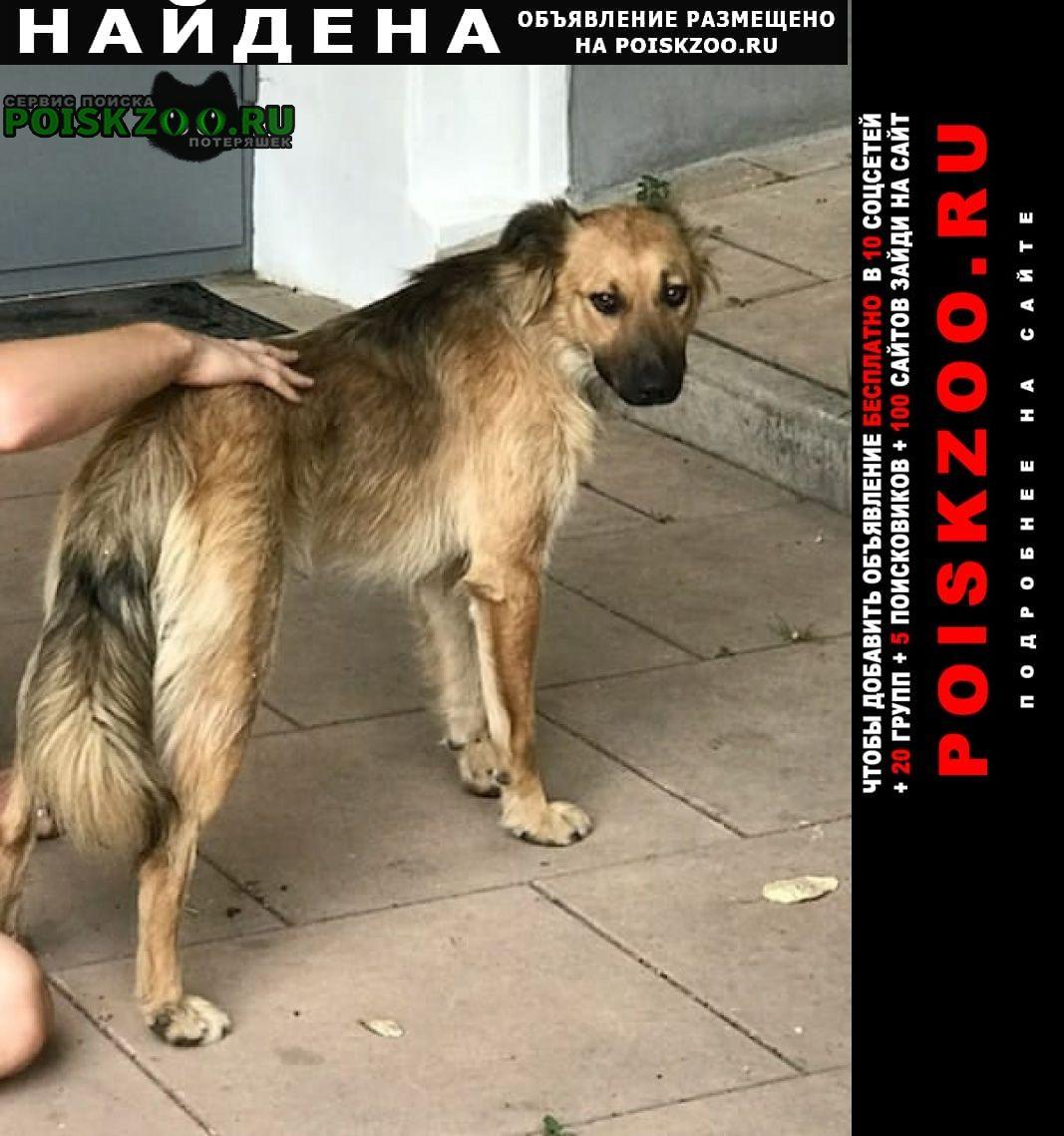 Найдена собака кобель, центр Москва