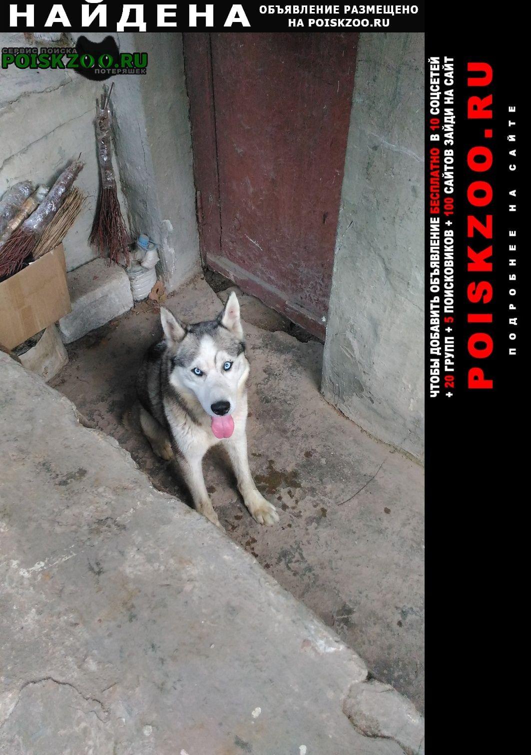 Найдена собака хаски Севастополь