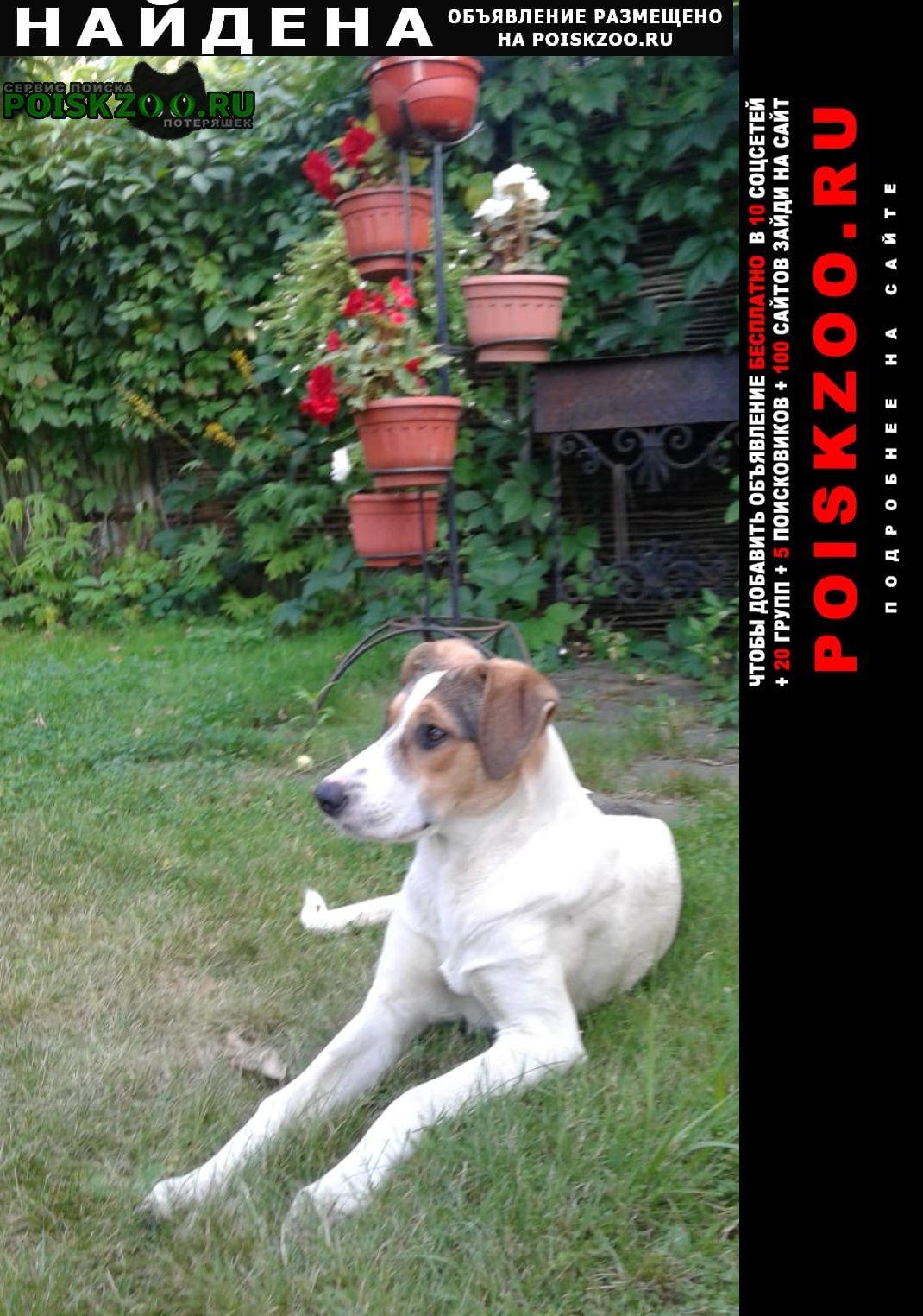 Найдена собака кобель в загорянке Загорянский