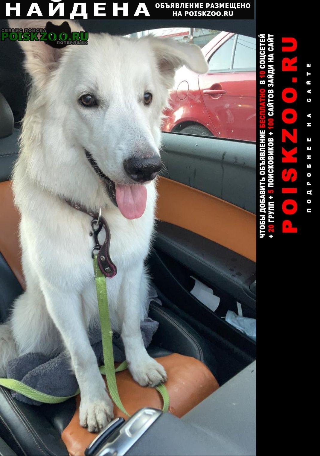 Найдена собака.г Москва