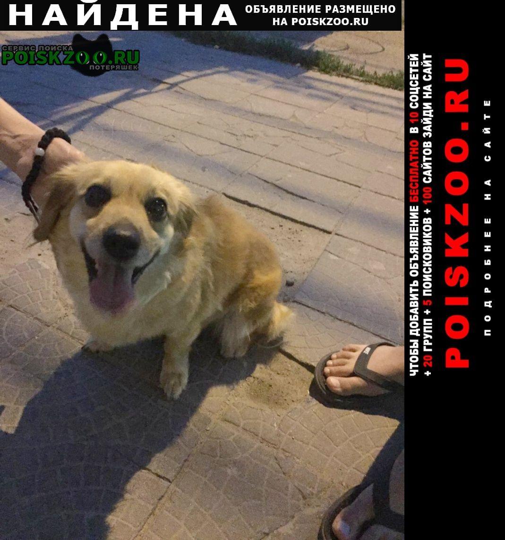 Найдена собака. Волгоград