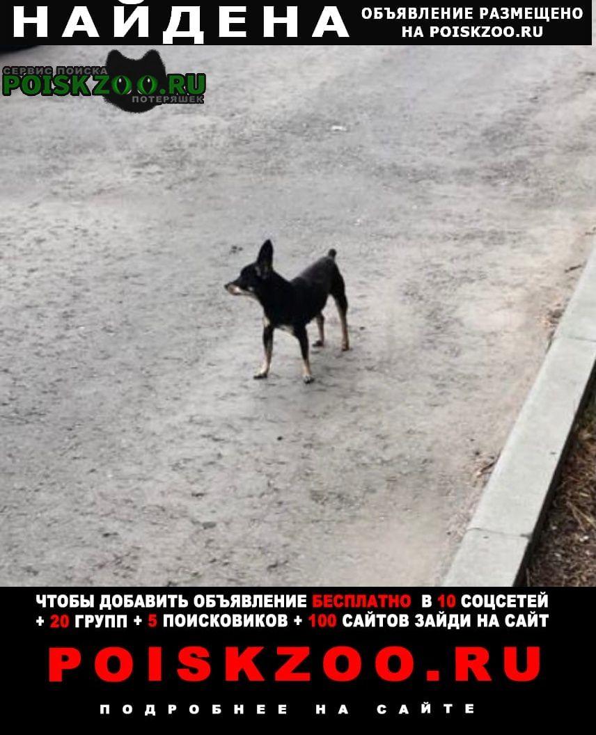 Найдена собака Жуковский