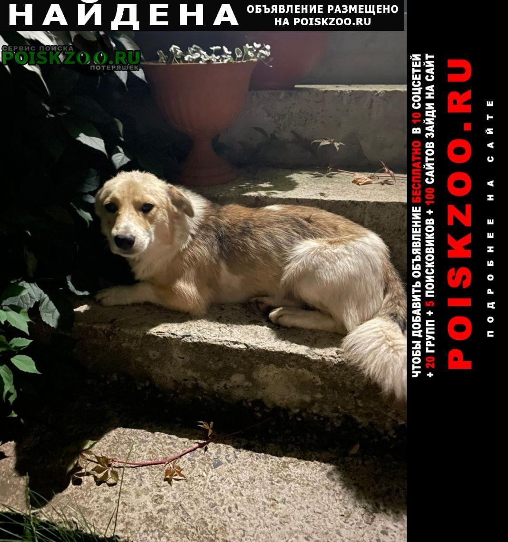 Найдена собака кобель Ставрополь