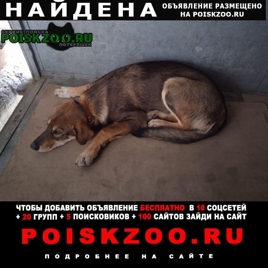 Найдена собака в е Екатеринбург
