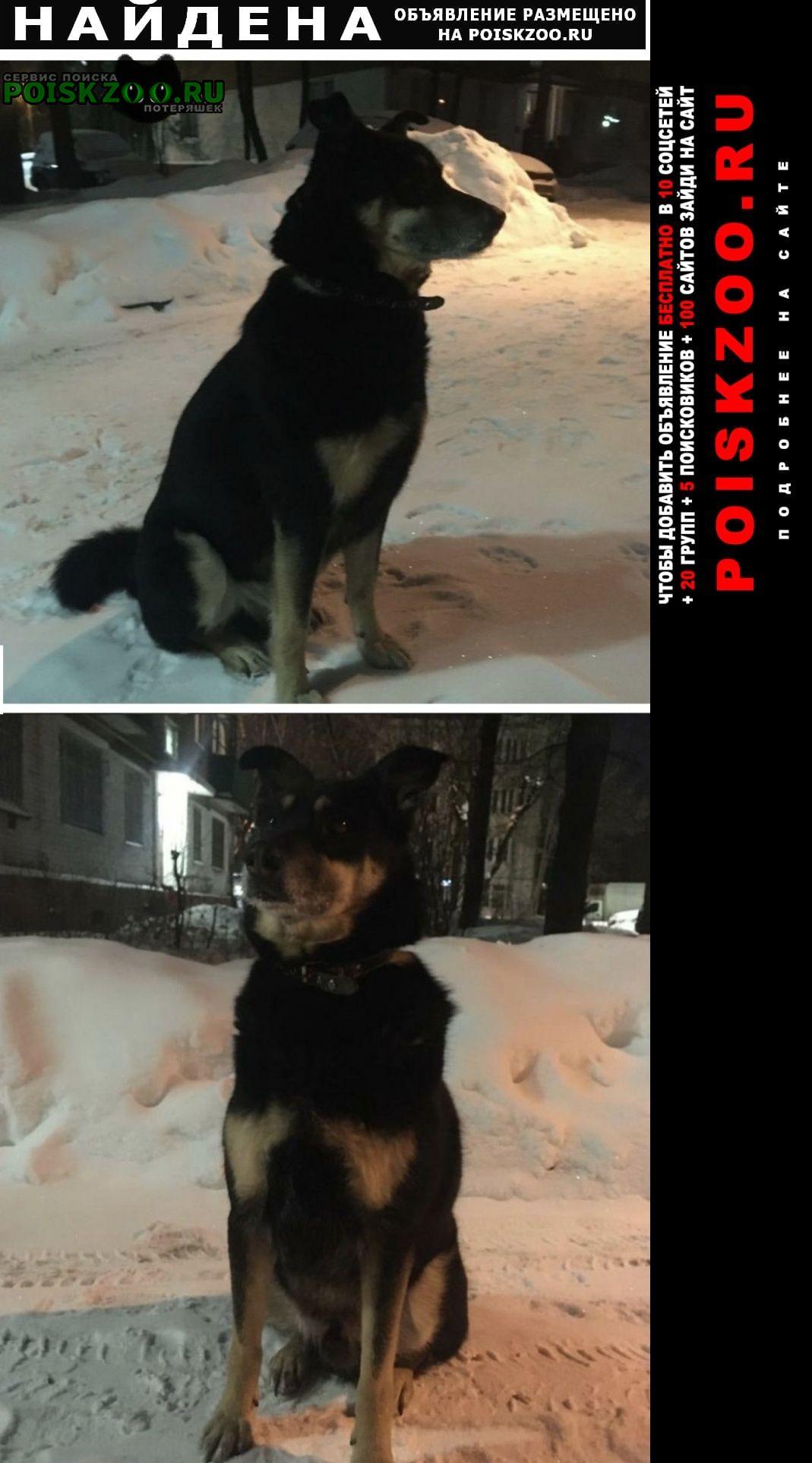 Найдена собака Химки