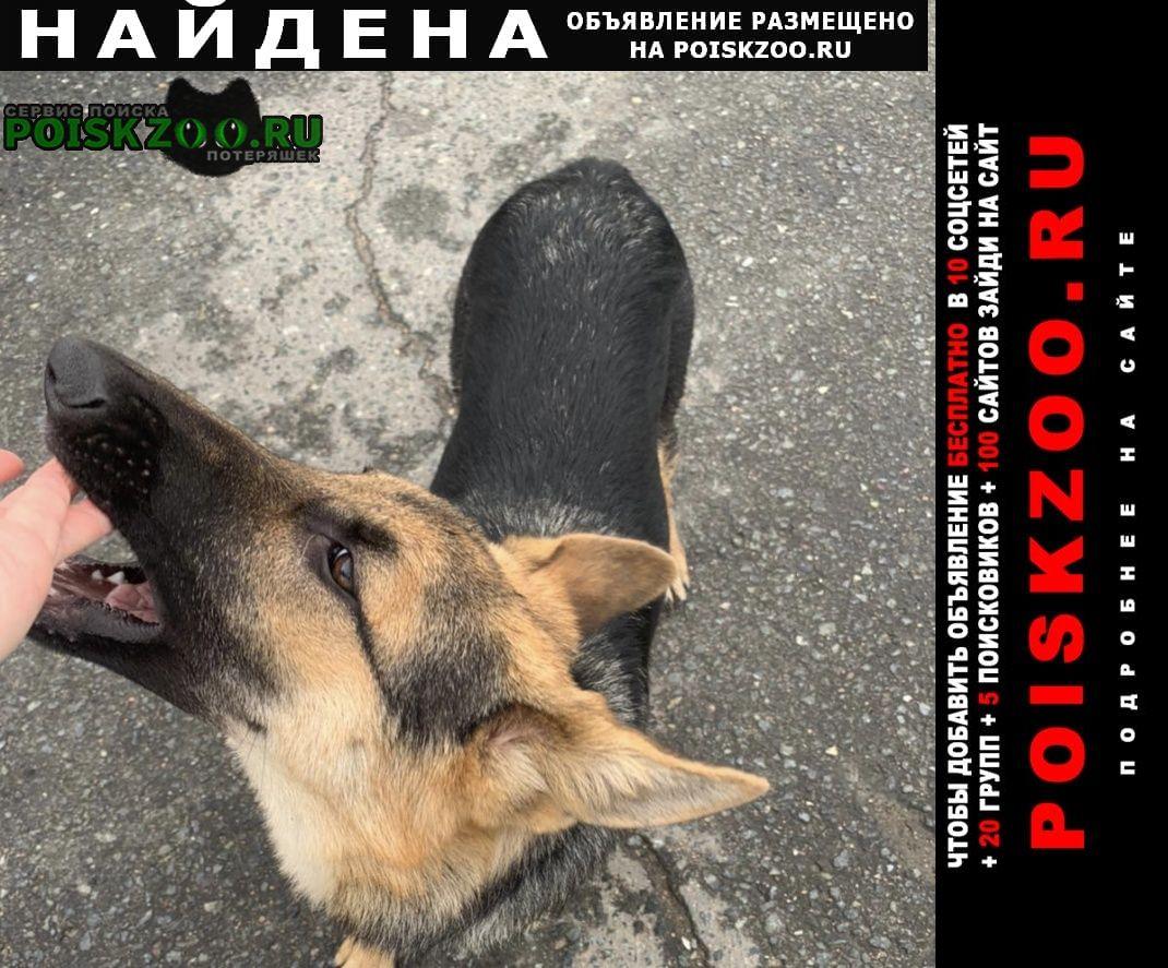 Найдена собака кобель замечен пёс Домодедово