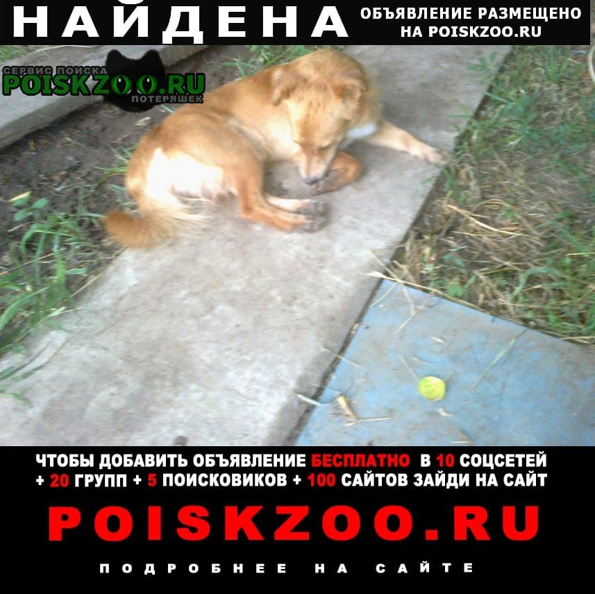 Найдена собака кобель Ахтубинск