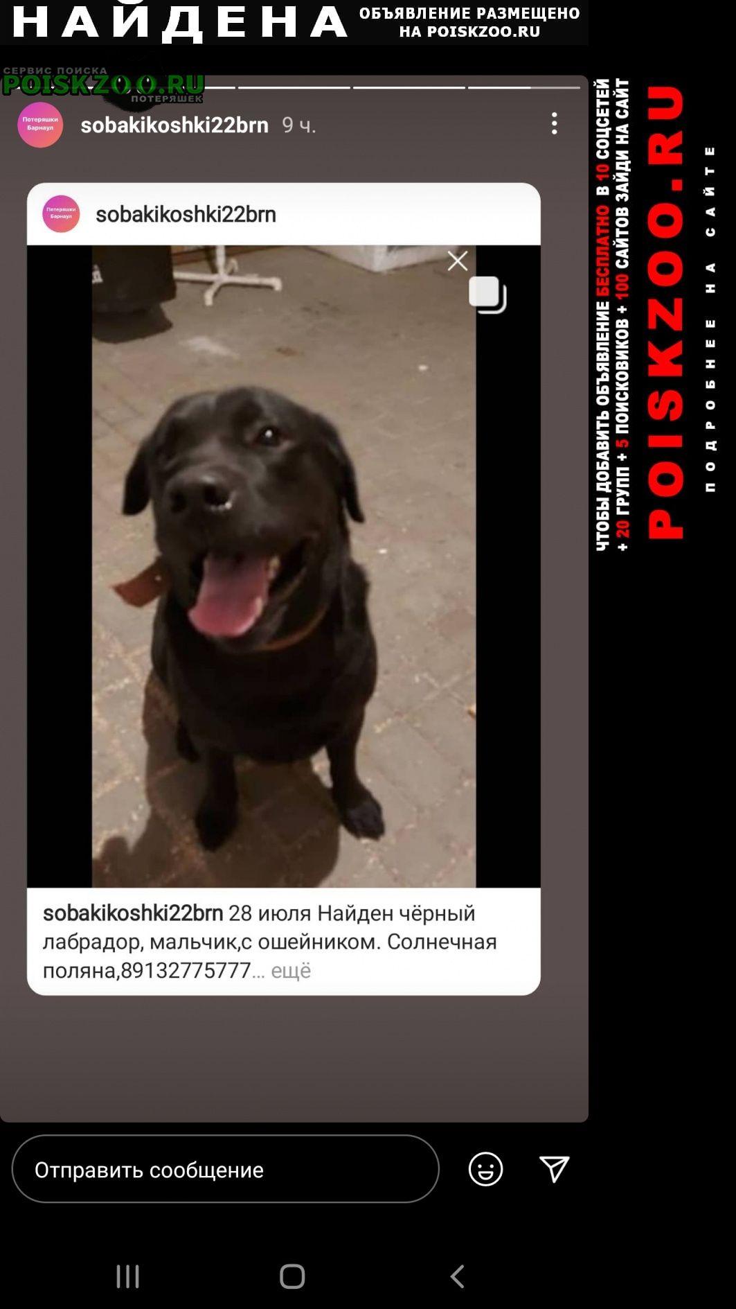 Найдена собака кобель лабрадор Барнаул