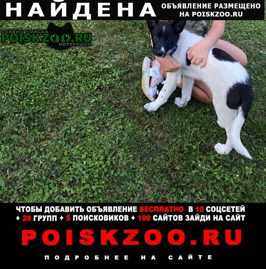 Найдена собака щенок ждёт хозяина Видное