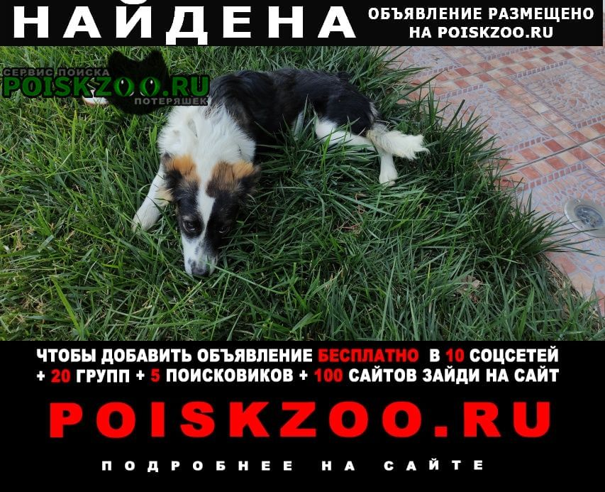 Найдена собака супсех / Анапа