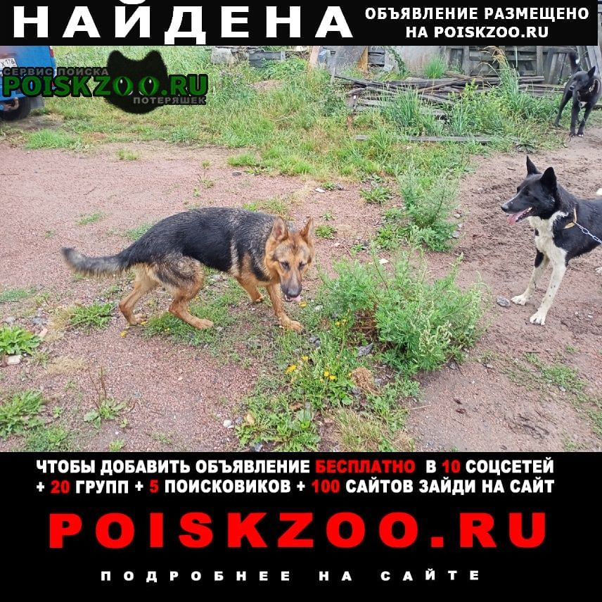 Найдена собака Ломоносов