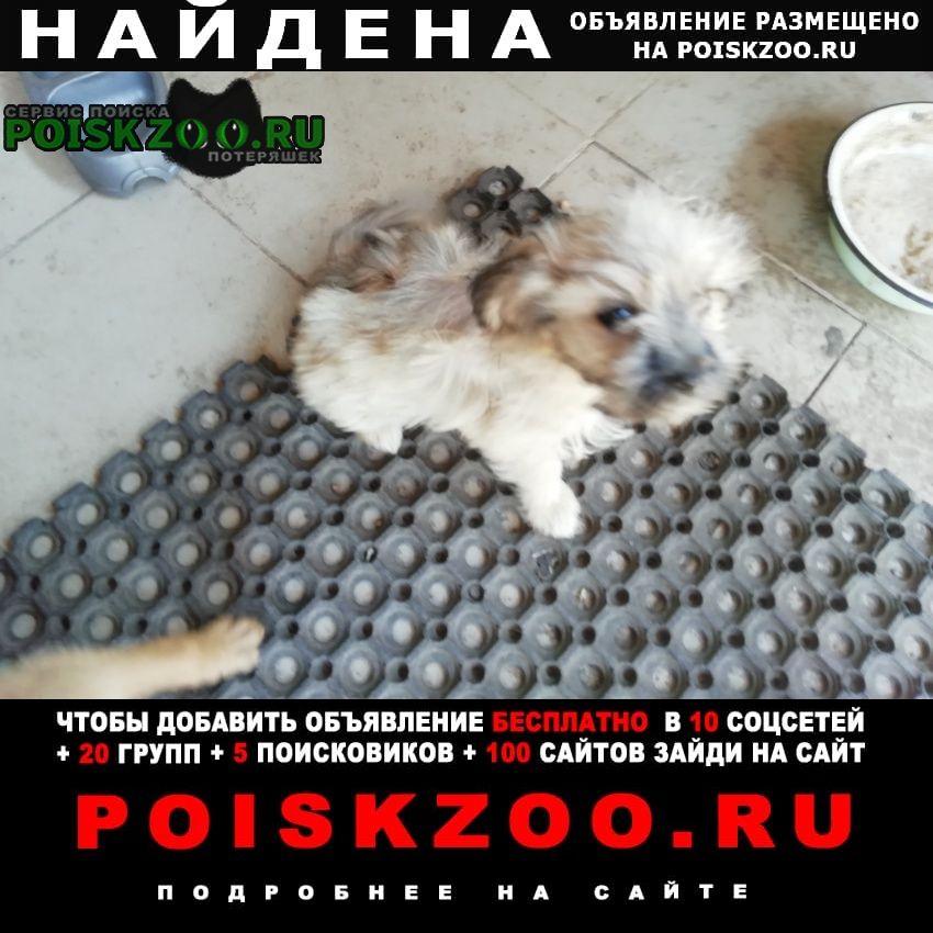 Найдена собака щенок Прямицыно