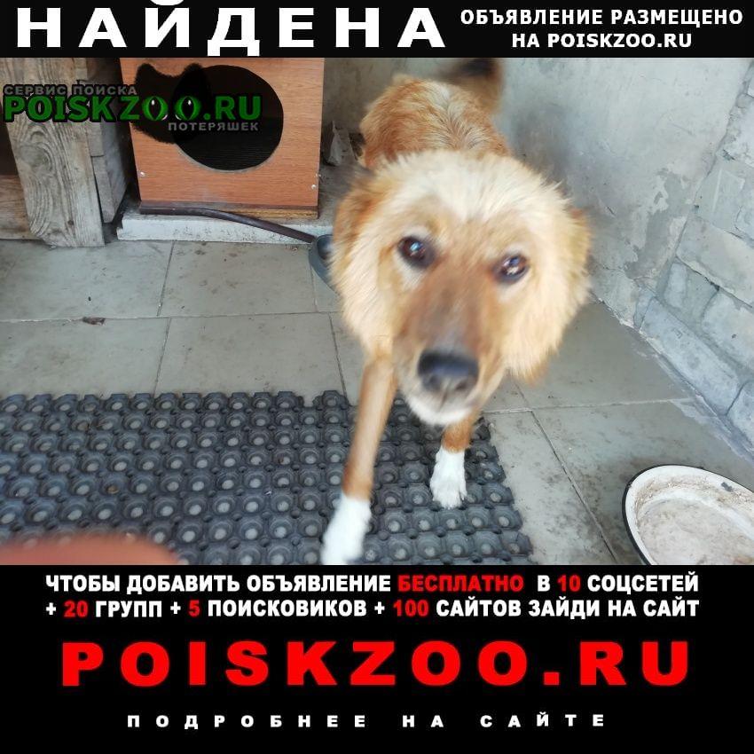 Найдена собака кобель Прямицыно