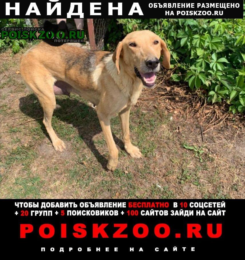 Найдена собака русская гончая Ясногорск