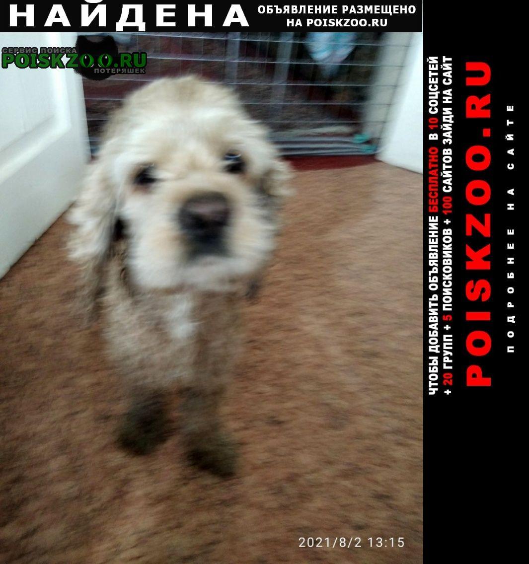 Найдена собака кобель Белгород