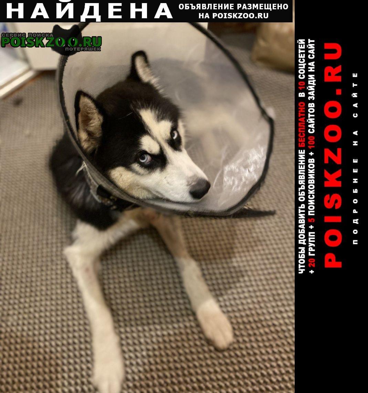 Найдена собака кобель отдам в добрые руки Москва