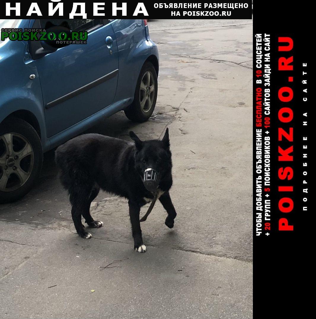 Найдена собака чёрная, поводок, ошейник Москва
